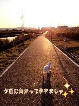 kome yuhi.jpg